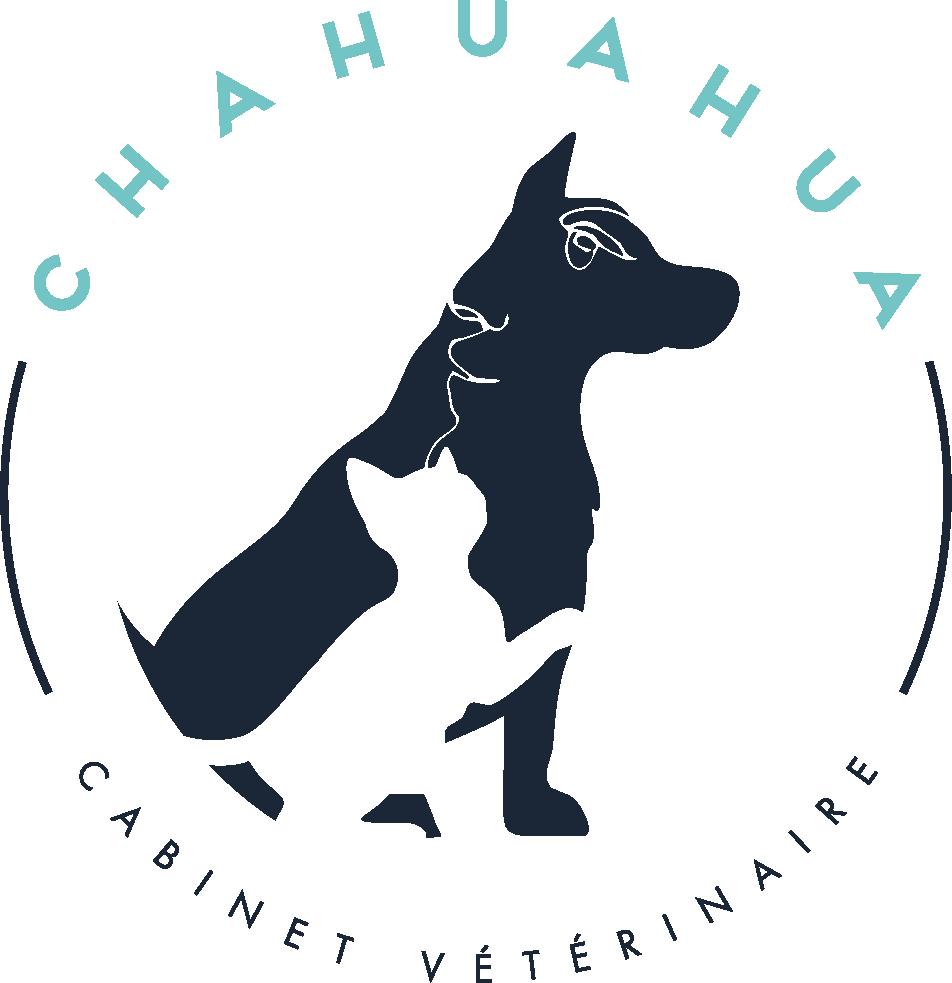 Chahuahua – Cabinet vétérinaire Nice